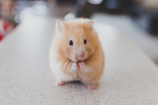 Le syndrome du hamster